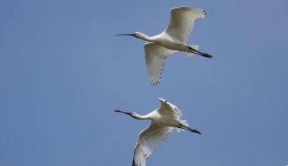 El proyecto 'Eurobird' permitirá a Extremadura y Portugal acondicionar espacios naturales para avistar aves