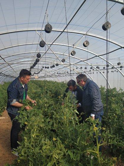 El PP propone en Calahorra medidas como parcelas agrícolas para jóvenes agricultores