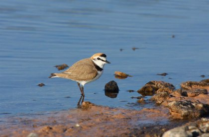 La ONG SEO/BirdLife cumple hoy 65 años, con casi 15.000 socios y cerca de 32.000 voluntarios