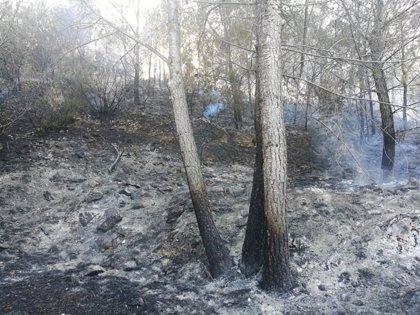 Un incendio calcina media hectárea de un pinar en una urbanización de Xàbia