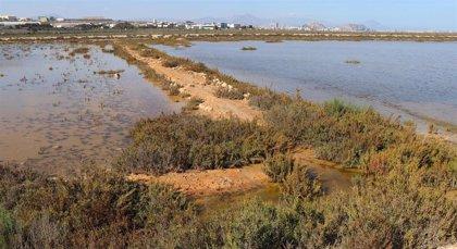 """Amigos de los Humedales rechaza la segunda pista del aeropuerto de Alicante-Elche por el """"grave impacto ambiental"""""""