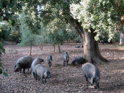 Las exportaciones españolas de porcino a China crecen más de un 30% en los dos primeros meses del año