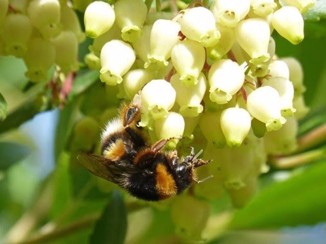 Granada.- La miel de madroño inhibe la proliferación celular en líneas de cáncer de colon, según un estudio