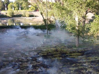 """El Ayuntamiento llama """"a la prudencia"""" para que evitar más incendios de pelusas en los parques de Logroño"""