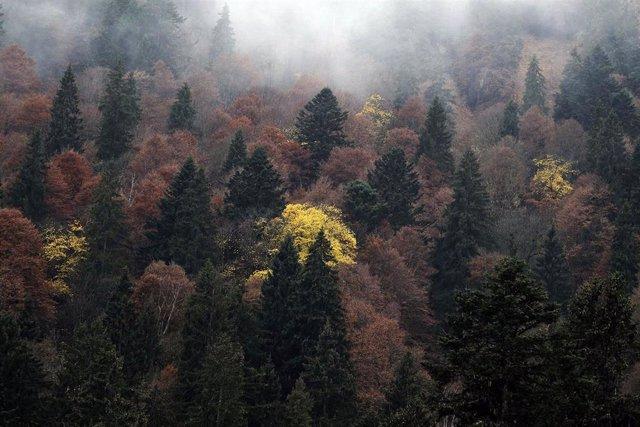 Primer mapa mundial para entender cómo el clima altera los bosques