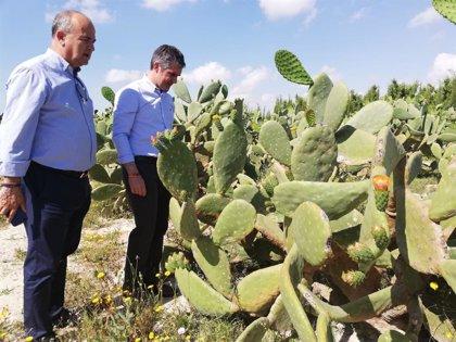 Murcia se consolida como una de las comunidades con mayor diversidad agrícola con más de 3.130 cultivos diferentes