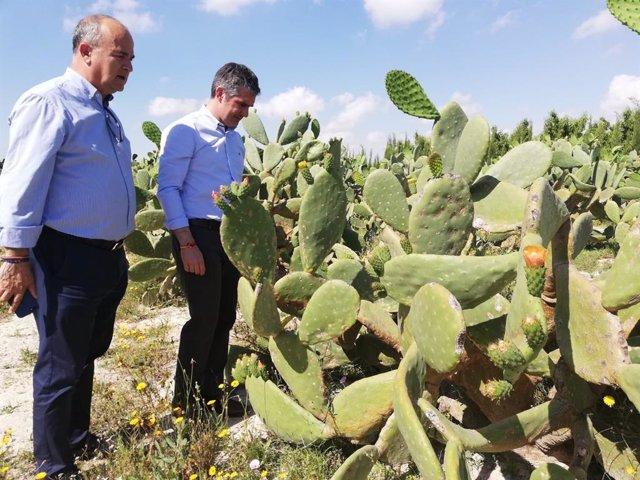 La Región se consolida como una de las comunidades con mayor diversidad agrícola con más de 3.130 cultivos diferentes