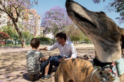 El Colegio de Veterinarios de Madrid entregará el 29 de mayo la cuarta edición de sus Premios Bienestar Animal