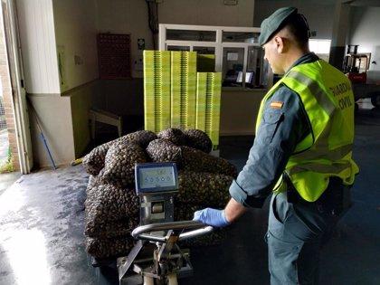 Interceptada una tonelada de almejas clandestinas con un valor de 11.000 euros en O Grove (Pontevedra)