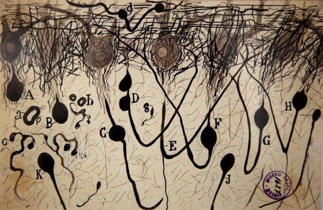La Universidad de Navarra acoge una exposición con 36 grabados de Santiago Ramón y Cajal sobre neuronas