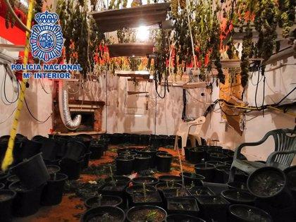 Tres detenidos tras localizar 346 plantas de marihuana en un domicilio de Almería capital
