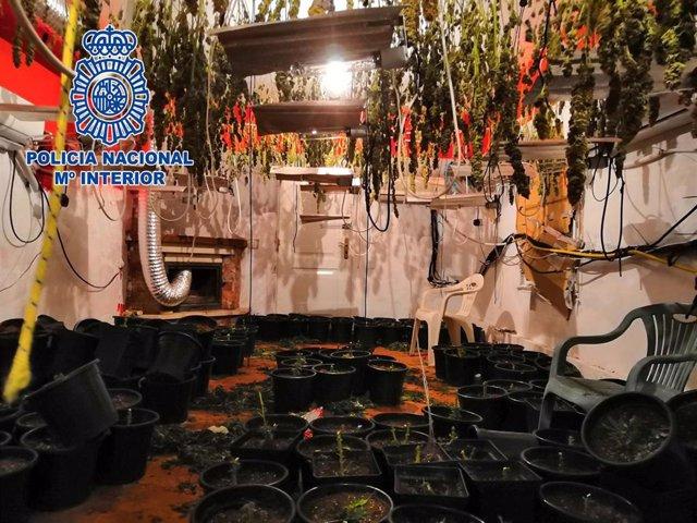 Almería.-Sucesos.- La Policía Nacional detiene a tres personas tras localizar 346 plantas de marihuana en un domicilio