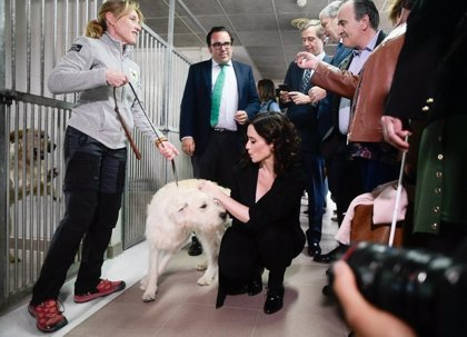 """Ayuso defenderá en el debate de Telemadrid sus """"propuestas"""" y tiene prácticamente decidido que no irá al de Prisa"""