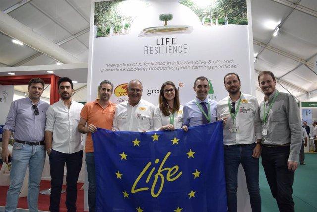 Jaén.- Life Resilience trabaja con 1.050 genotipos de variedades de olivos para buscar los más resistentes a la Xylella