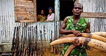 WWF reclama más esfuerzo mundial para frenar el tráfico de especies que amenaza la supervivencia de animales y plantas