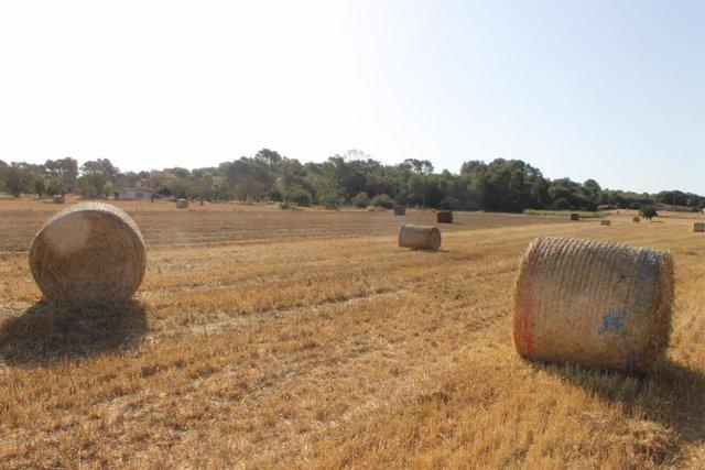 Semilla destina 1,2 millones a una campaña extraordinaria de alimentación animal por la sequía agraria