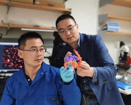 Crean un tipo de insulina 'inteligente' que ayuda a prevenir la hipoglucemia en personas con diabetes