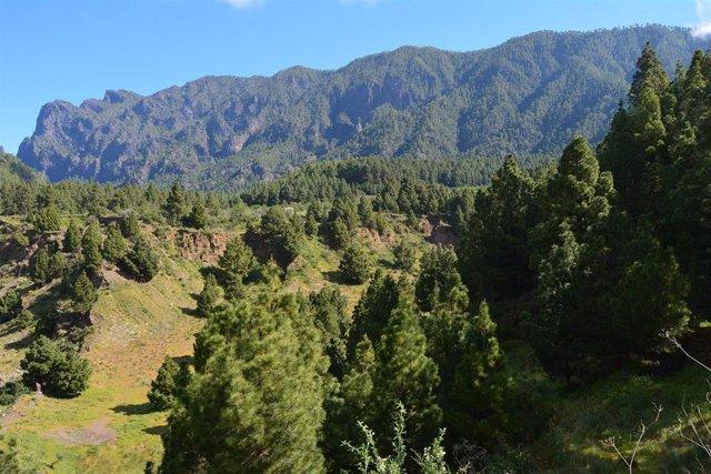 El Cabildo de La Palma destinará 4 millones de euros a la protección y mejora del medio ambiente