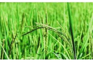 Todo lo malo que la agricultura ecológica europea provoca en la región de Iberoamérica
