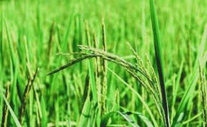Lo malo que la agricultura ecológica europea provoca en Iberoamérica