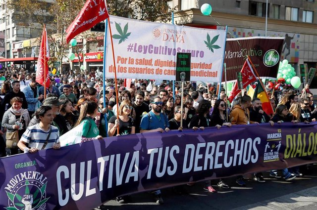 Chile.- Cientos de chilenos salen a las calles para exigir un mayor avance en la despenalización de la marihuana