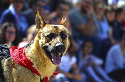 Mimos y juegos en el desfile de perros abandonados Aupa-Bioparc, donde algunos canes han encontrado hogar