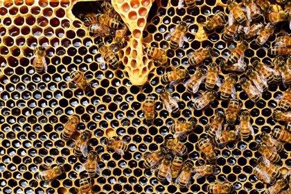 20 de mayo: Día Mundial de las Abejas, ¿por qué son las abejas tan importantes para el planeta?