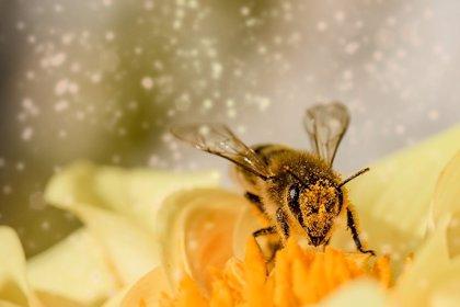 ¿Están las abejas en peligro de extinción en México?