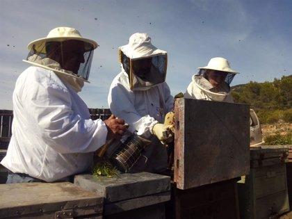 La polinización de las abejas aporta más de 400 millones al año a la agricultura de la Comunitat, según la Unió