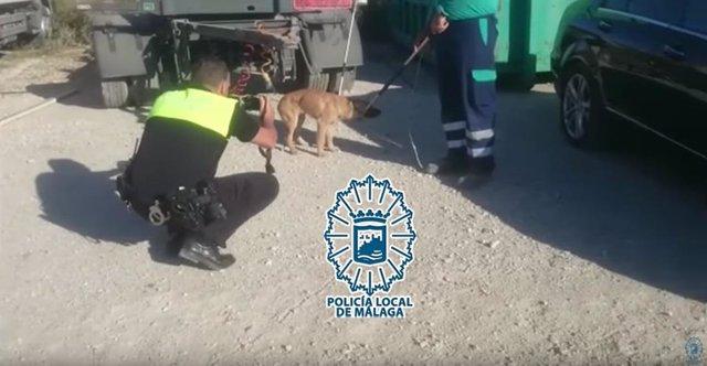 Capturado uno de los cinco perros que atacaron a un hombre en un polígono de Málaga
