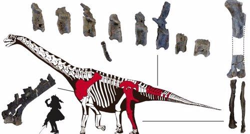 Nueva especie de dinosaurio saurópodo identificada en Portugal