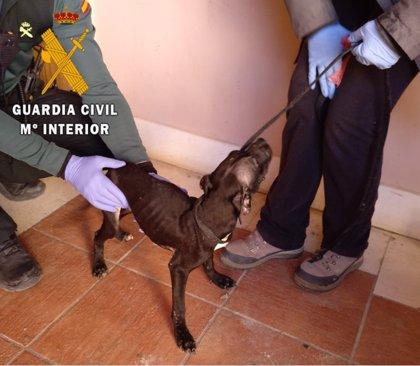 Investigado un varón con antecedentes por la muerte de un perro en Ocaña
