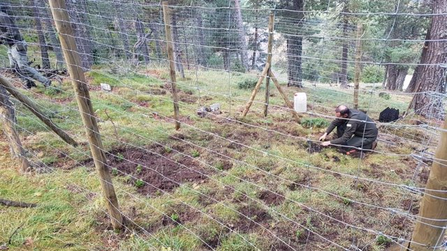 Endesa participa en la millora de l'hbitat de l'urogallo en la Reserva de Boumort (Lleida)