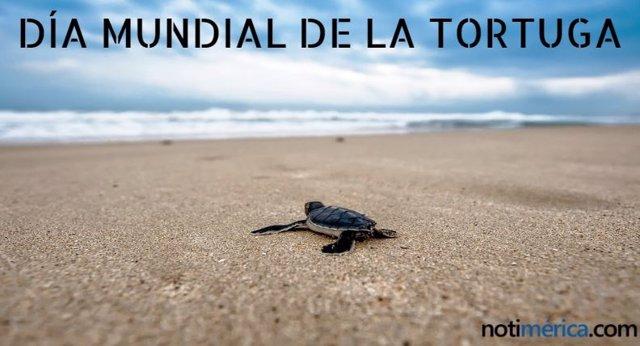¿Por Qué El Día Mundial De La Tortuga Se Celebra El 23 De Mayo?