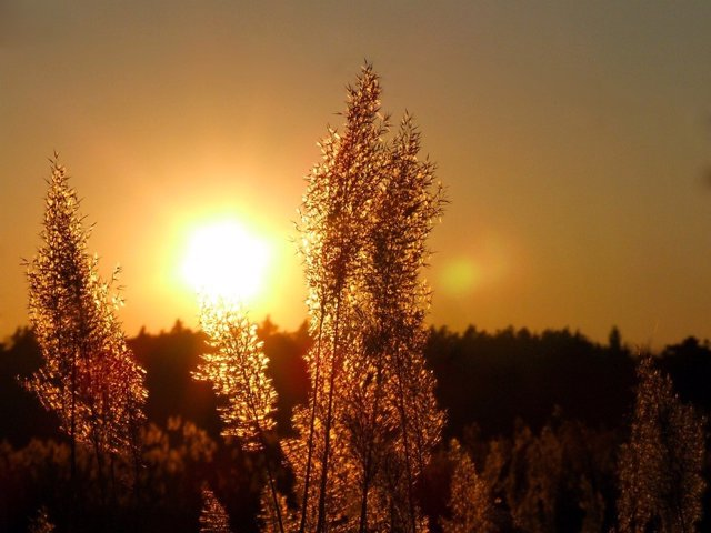Sol. Vitamina D. Atardecer. Amanecer