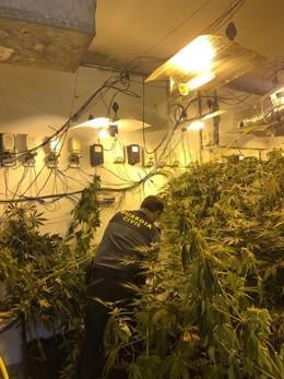 Granada.- Sucesos.- Incautadas 4.369 plantas de marihuana con once investigados en Atarfe, Santa Fe, Híjar y Órgiva