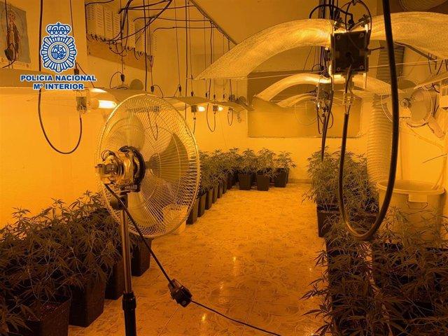 Málaga.- Sucesos.- Detienen al responsable de un laboratorio de cannabis y se incautan de 300 plantas de marihuana