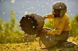 Els documentals 'Honeyland' i 'Me llamo Violeta' triomfen al palmarès del DocsBarcelona 2019 (ACN)
