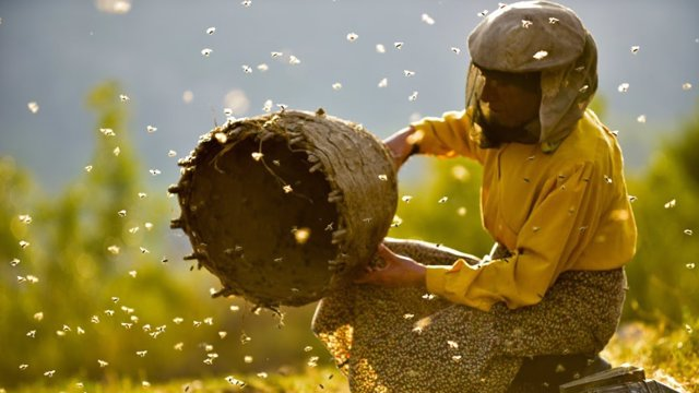 'Honeyland' Gana El Premio Docsbarcelona 2019 Al Mejor Documental