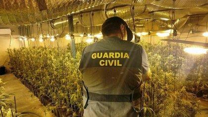 Detenidas siete personas por cultivo de 2.350 plantas de marihuana en naves industriales de La Haba (Badajoz)