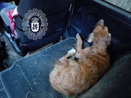 Rescatado un perro herido y desnutrido del interior de un coche aparcado en una calle de Badajoz