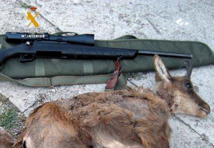 Investigados cuatro furtivos por cazar dos rebecos en Picos de Europa
