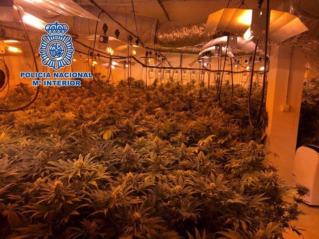 Granada.- Sucesos.- Dos detenidos y 742 plantas de marihuana incautadas en una operación antidroga en Dúrcal