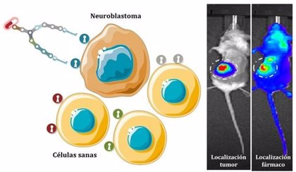 Diseñan unas moléculas sintéticas que pueden dirigir fármacos al neuroblastoma