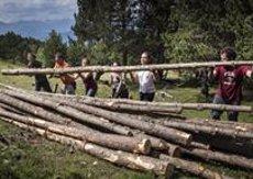 Mig miler de voluntaris milloraran la conservació dels boscos del Pirineu aquest estiu (GOVERN - Archivo)