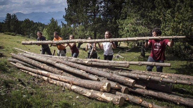 Mig miler de voluntaris milloraran la conservació dels boscos del Pirineu aquest estiu