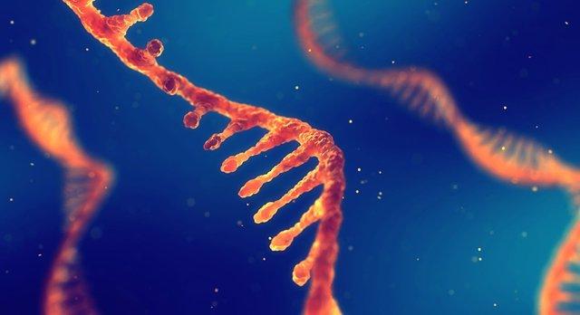 Construir una cadena de ADN o aprender sobre enfermedades genéticas, este sábado en el MUNCYT de Alcobendas