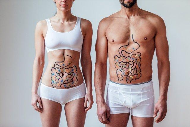 Probióticos, prebióticos, organismo, cuerpo, aparato digestivo