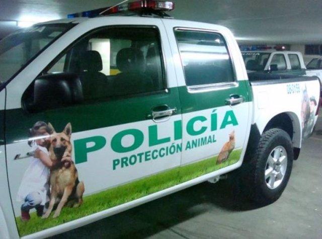 Actua exigeix a Cort la retirada de la declaració simbòlica 'Palma,  ciutat amiga dels animals'