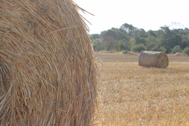 Abierto el plazo de solicitudes para la campaña extraordinaria de suministro de alfalfa seca deshidratada